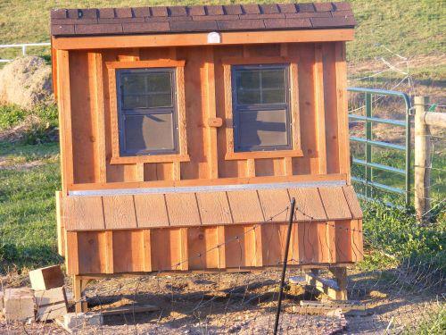 Chicken Retirement Home